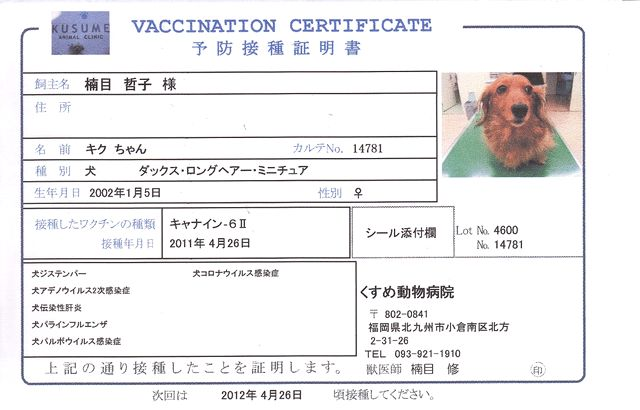 ワクチン 種類 猫